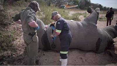 South Africa's state security minister denies involvement in illegal rhino trade