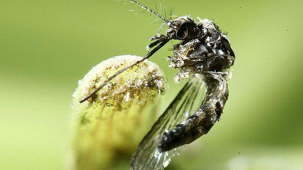 Vírus Zika já não é emergência mundial