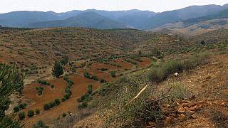 مزارعون مغاربة يكافحون ظاهرة التغير المناخي