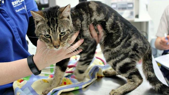 Trooper survives after home alone cats eat one another