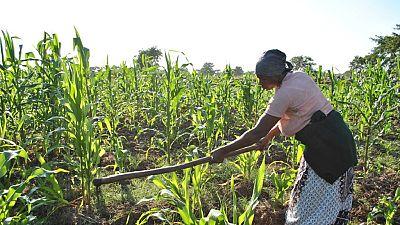 Le Fida recommande un plus grand intérêt au secteur rural en Afrique de l'Ouest et centrale