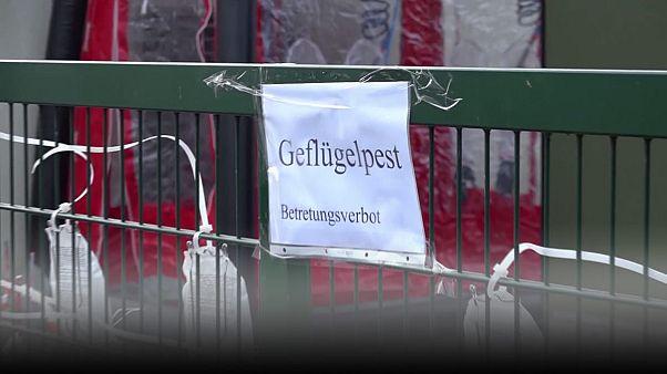 Συναγερμός στη Γερμανία μετά τα νέα κρούσματα γρίπης των πτηνών