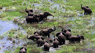Le Mozambique renforce son arsenal contre le trafic des espèces protégées