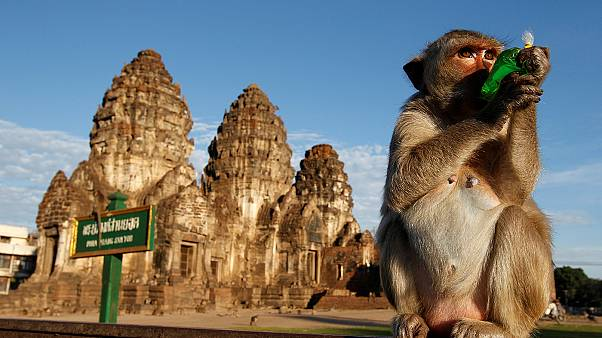 Thai province thanks monkeys with annual fruit buffet