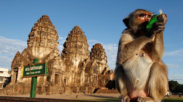 Thailandia: torna il tradizionale banchetto delle scimmie