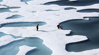 النظام البيئي للكوكب ضحية للتغيّر المناخي
