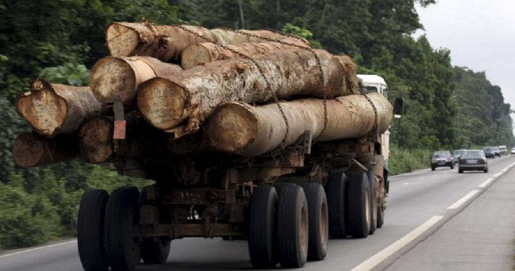 Mozambique moves to protect hardwood forests with new law