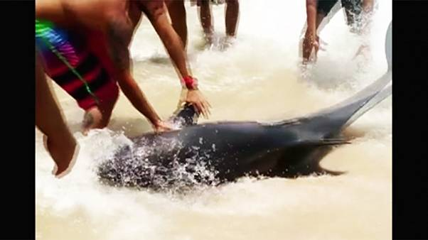 Brazilian beachgoers rescue dolphin stranded in shallow water