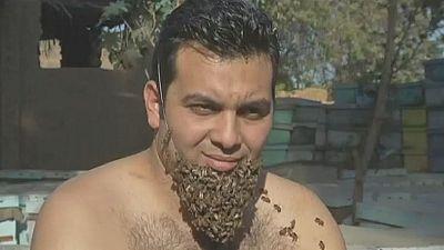 En Egypte, un homme cultive une barbe d'abeilles pour sensibiliser sur le sort de ces insectes