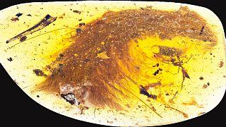 Ανακάλυψαν ουρά φτερωτού δεινοσαύρου 99 εκατ. ετών!
