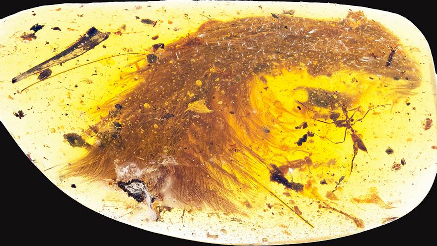Remarkable feathered dinosaur tail found in chunk of amber