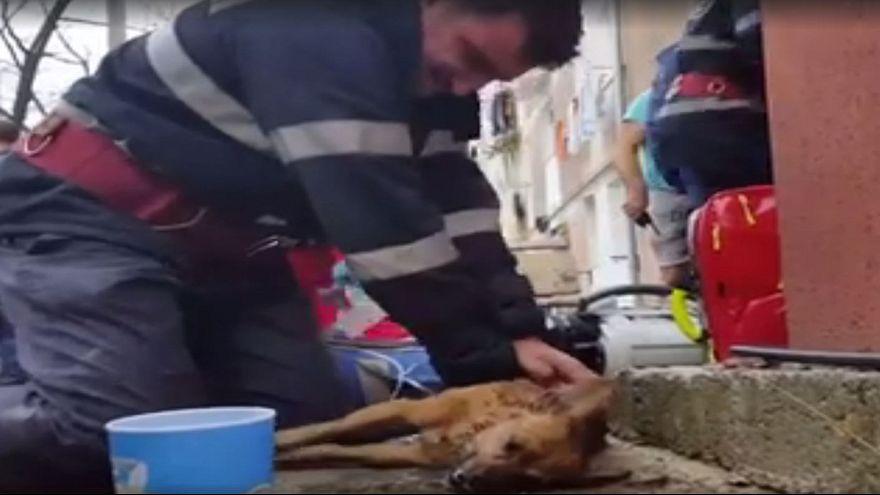 Sevimli köpek suni teneffüs ve kalp masajıyla hayata döndü