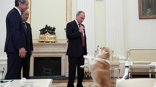 Putin's barking dog take centre stage at media interview