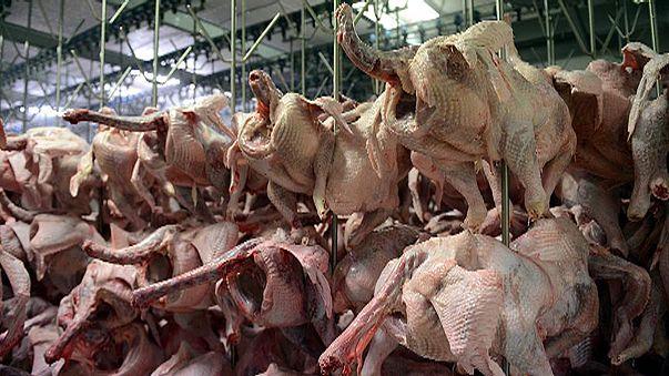 Türkiye hindi eti yemiyor ama satıyor