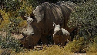 Regard sur le massacre des animaux sauvages en Afrique