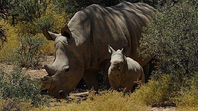 Burning ivory, waging war: world battles poaching in 2016