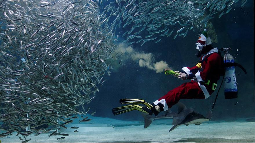Underwater Santa treats fish