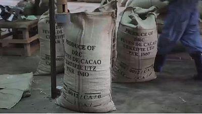 RDC: timide reprise de la culture du cacao dans le Nord-Kivu