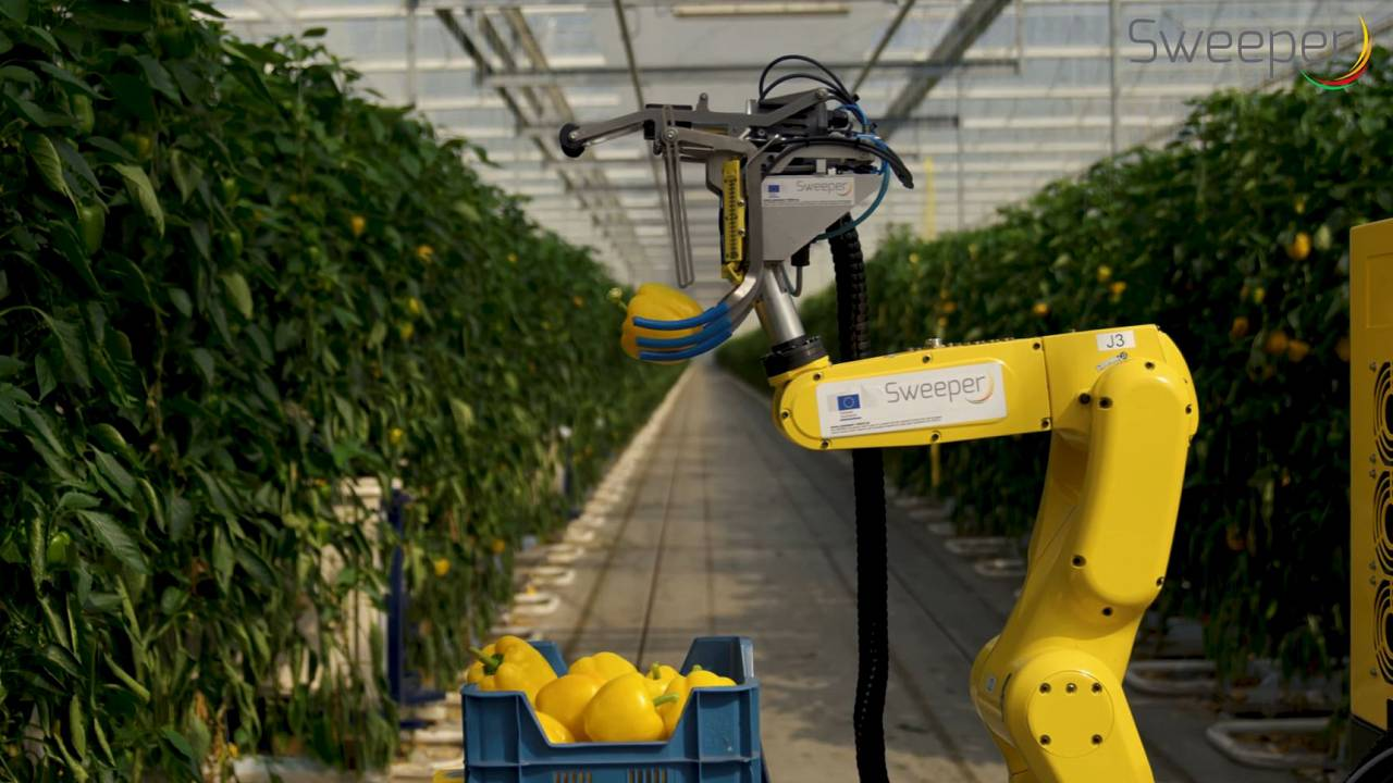 Image: The SWEEPER robot is the first sweet pepper harvesting robot in the