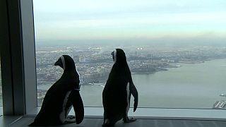 پنگوئن های گردشگر در نیویورک