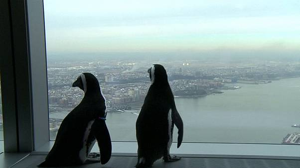 Sevimli penguenler New York'ta