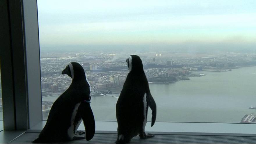 Pinguini..turisti per caso a New York