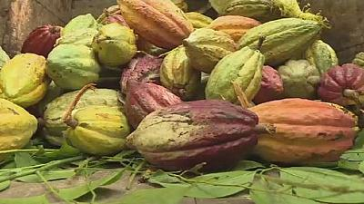 Madagascar: cacao recherché, planteurs mal payés
