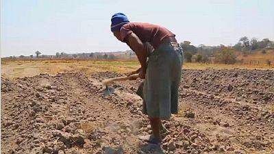 Sécheresse en Afrique australe : la situation humanitaire inquiète