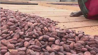 Ivory Coast's cocoa arrivals at the port up 8 pct