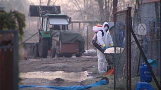 Emberre nem veszélyes madárinfluenza Lengyelországban