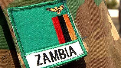 Zambian army to fight caterpillar invasion