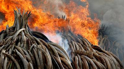 La Chine va interdire le commerce de l'ivoire d'ici fin 2017