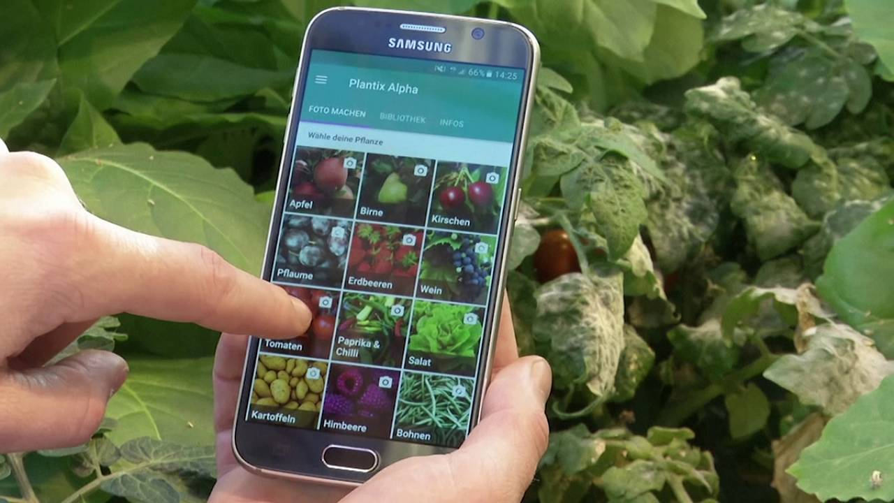 The plant doctor app helping to identify plant disease
