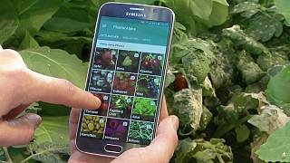 اپلیکیشن تلفن همراه برای تشخیص بیماری درختان