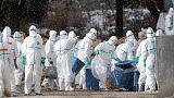 فرنسا تعدم مئات الآلاف من البط لاحتواء فيروس انفلونزا الطيور