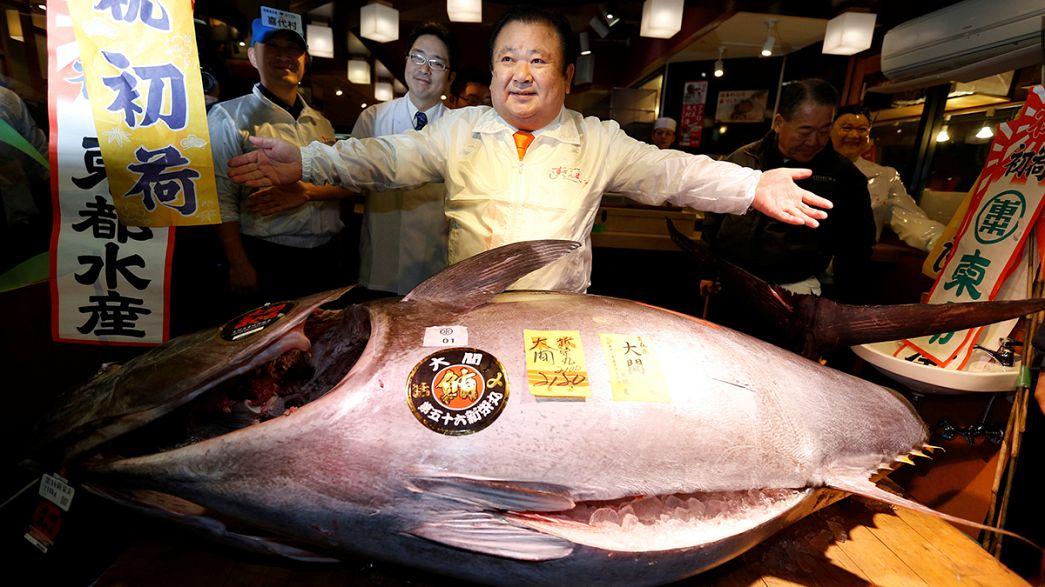 Sushi: Mais de 600 mil euros por um atum no mercado de Tóquio