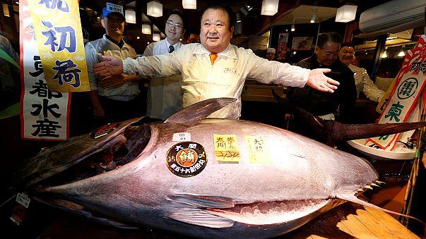 اليابان: 74.20 مليون ين سعر سمكة تونة حمراء