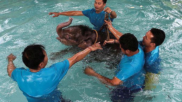 Hidroterapia para un cachorro de elefante