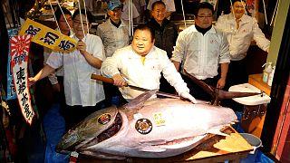 اليابان: سمكة تونة حمراء تباع بسعر 605 يورو في مزاد علني