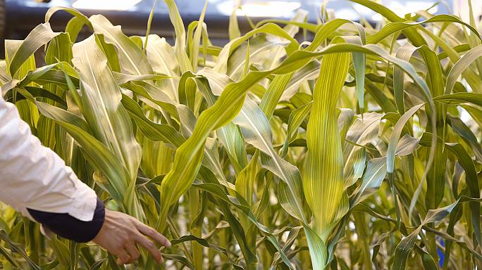 ChemChina, Syngenta work to appease EU competition watchdog