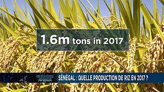 L'économie chinoise maintient une croissance régulière et la révolution du riz au Sénégal