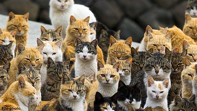 The Australian feral feline epidemic