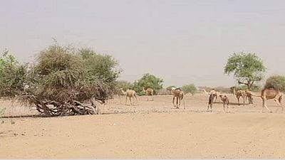 La crise humanitaire de plus en plus critique dans le bassin du lac Tchad selon l'ONU