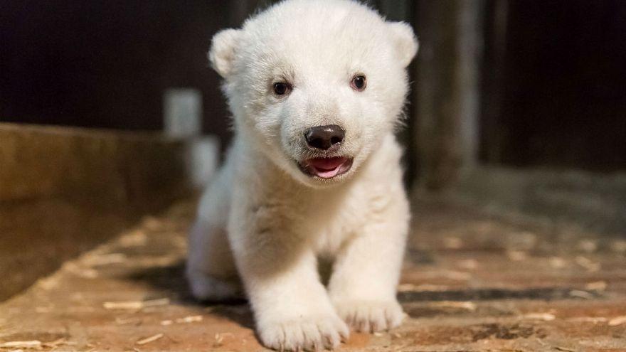 4,6 Kilo schwer: Der kleine Eisbär in Berlin ist ein Junge