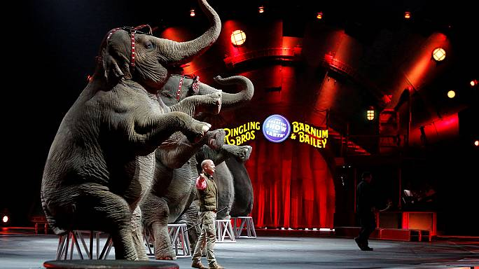 Fil gösterisi bitti, sirk battı