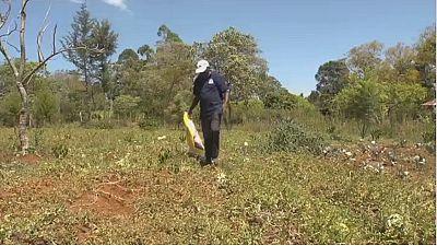 Kenyan maize farmers seek juicier profits from watermelons