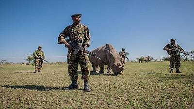 Two poachers killed in Kenyan national park: wildlife service