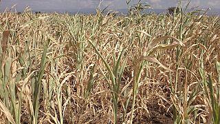 Le spectre de la sécheresse plane de nouveau sur l'Éthiopie