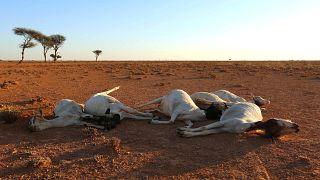 L'ONU prévient d'une nouvelle crise alimentaire en Somalie