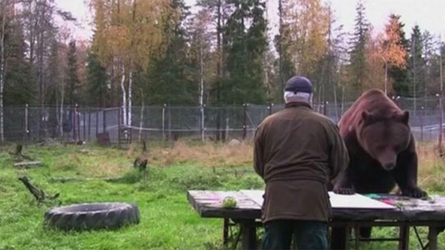 Finnország: Juuso, a barna medve tárlata